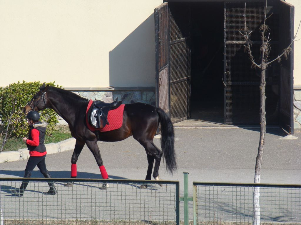 Girl with a horse at Tbilisi hippodrome