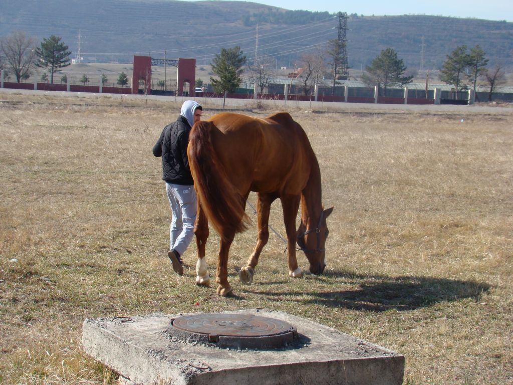 At Tbilisi Hippodrome