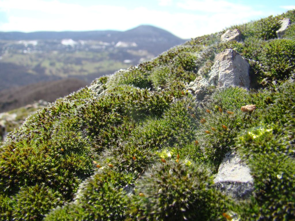 Moss on the rocks