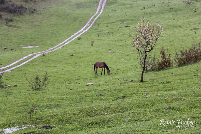Horse on pasture near Jvari monastery