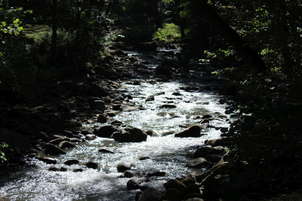 Borjomula river in park
