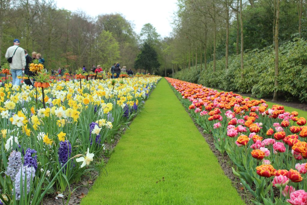 Tulips and other flowers at Keukenhof garden