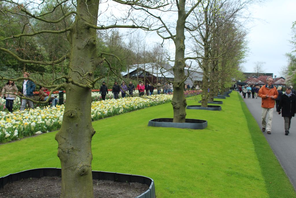 At Keukenhof's Flower garden