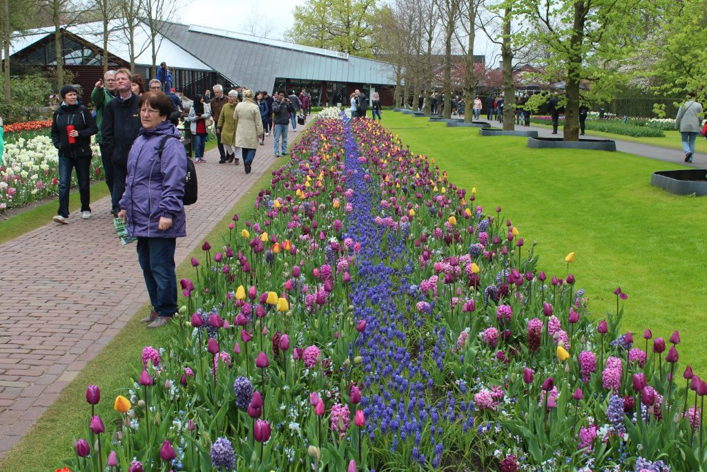 Plenty of visitors at Keukenhof