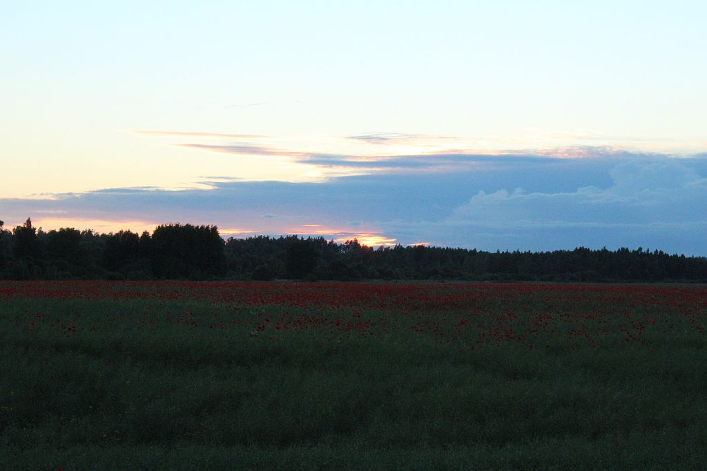 Poppy field near Viesāti