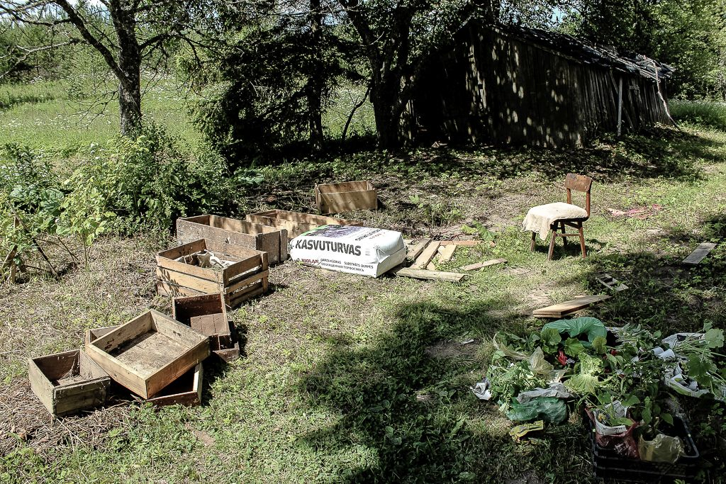 Old boxes reused for growing veggies