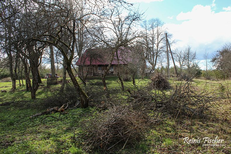 View towards house from apple orchard