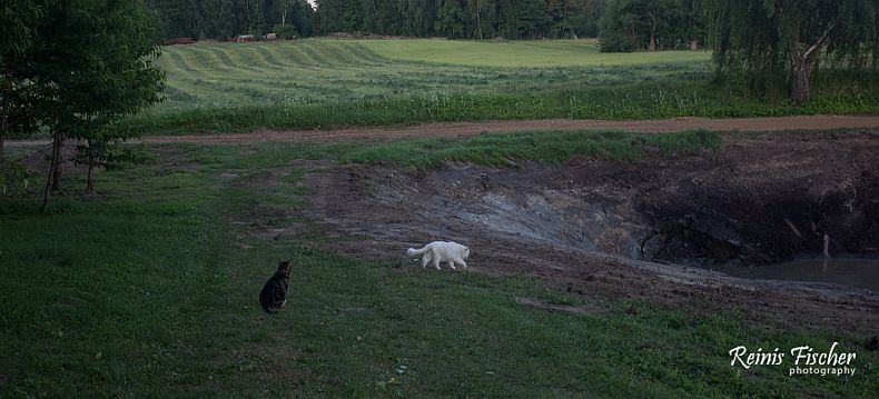 Cats discovered that there is a pond