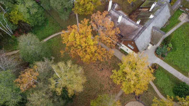 Forest house from a drone flight