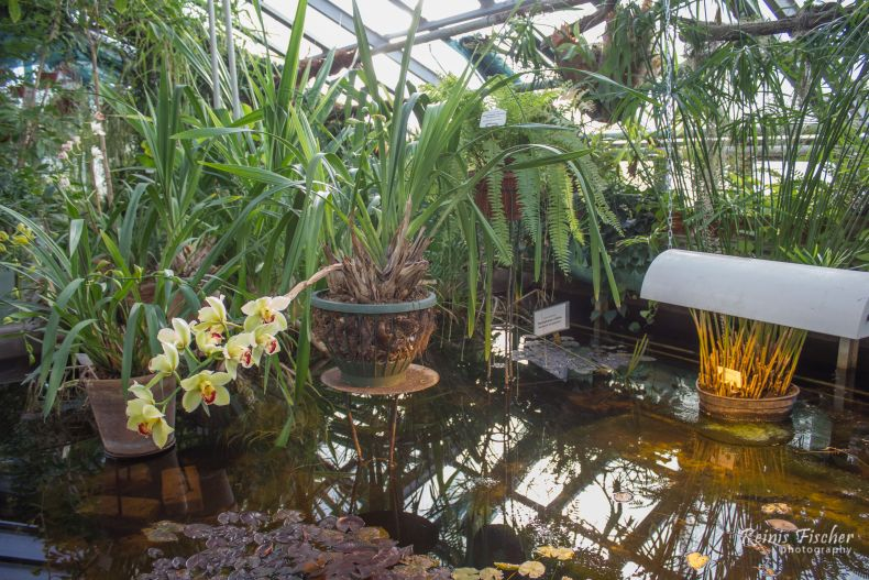Inside tropical house