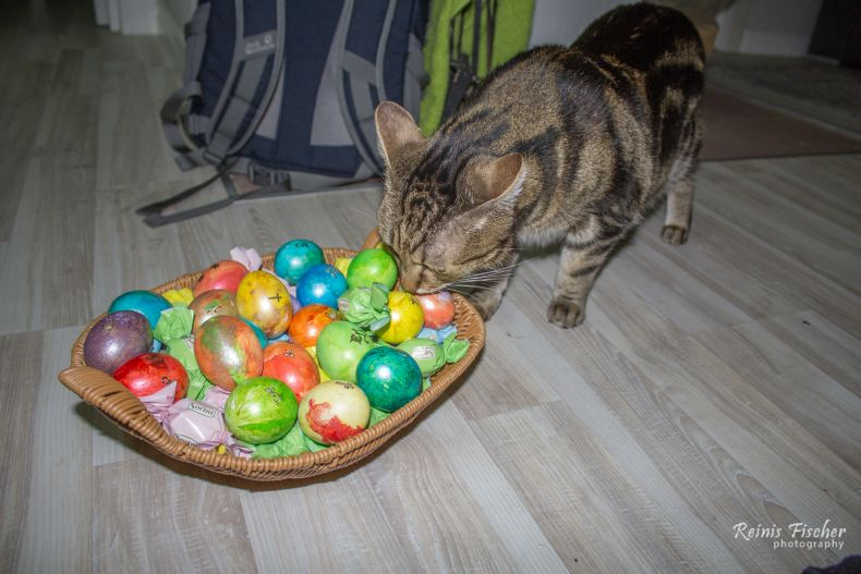 Cat enjoying painted Easter eggs
