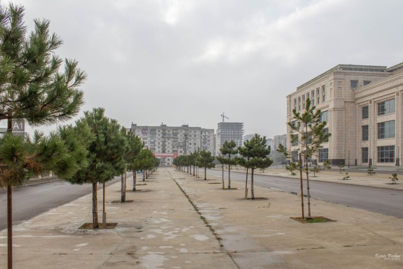 Concreted pine alley at Tbilisi Sea Plaza