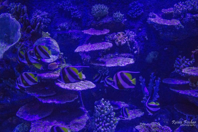 Different species of fish at Antalya aquarium