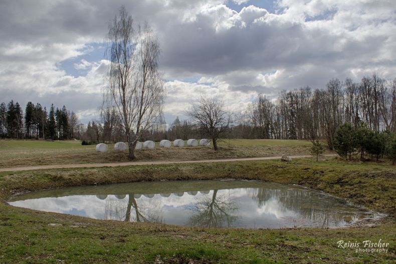 Pond in April 2017