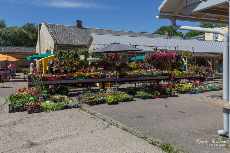 Flowers and plants for sale at Valmiera market