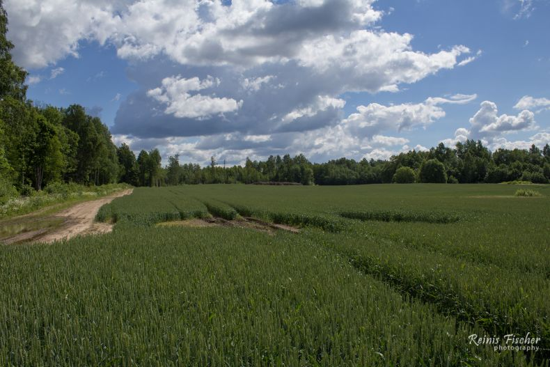 Crop fields at Miciņi