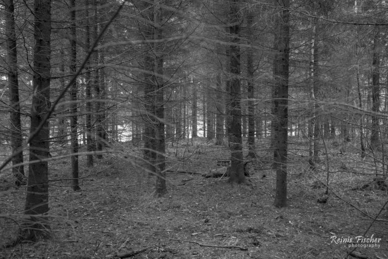 Clean forest in Western Latvia